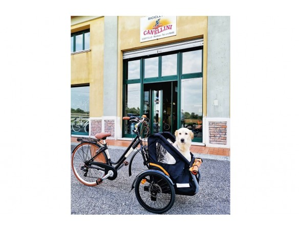 Cargo Bike AddBike